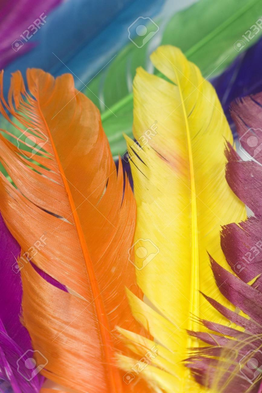 diferent animal color feathers in vertical position Stock Photo - 1849802