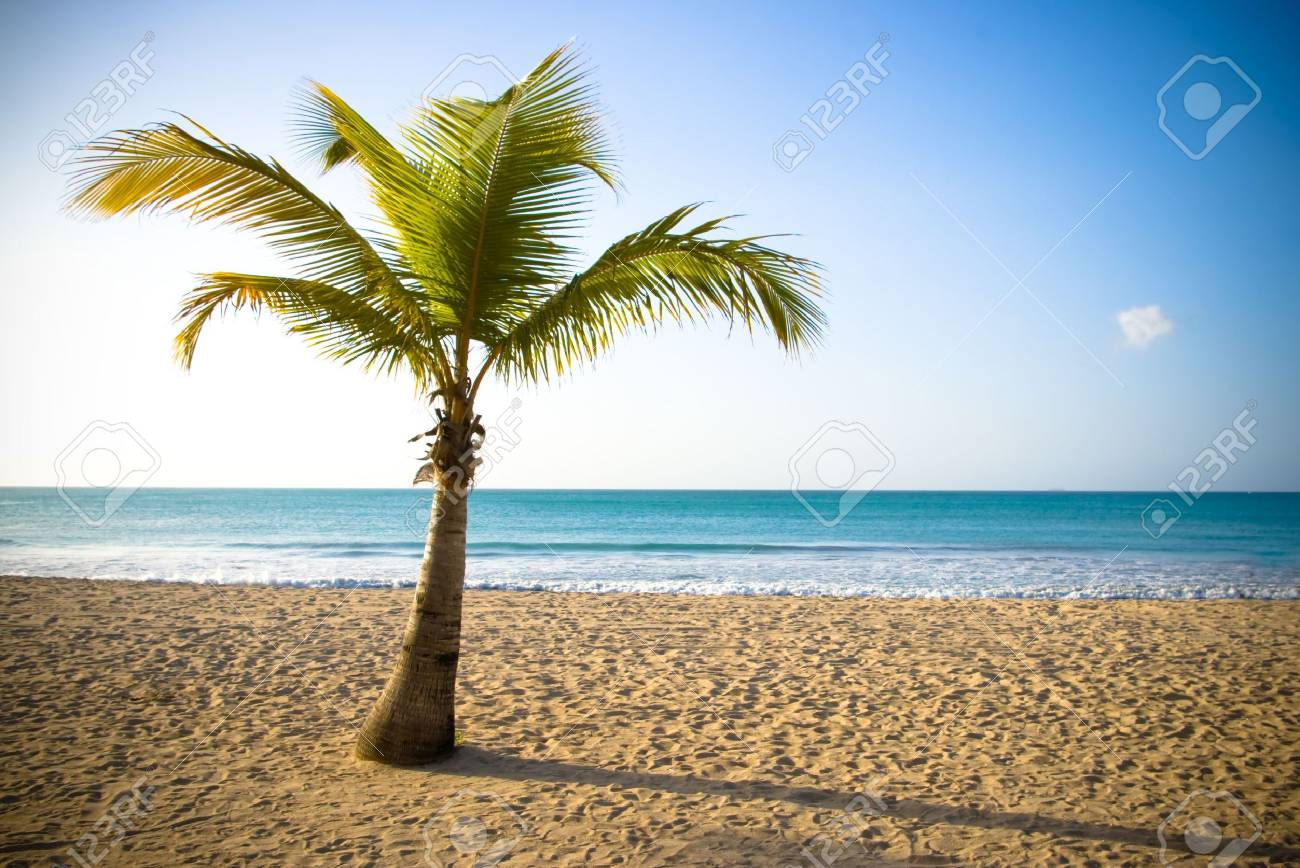 palm in beautiful view from caribbean beach Stock Photo - 3075582