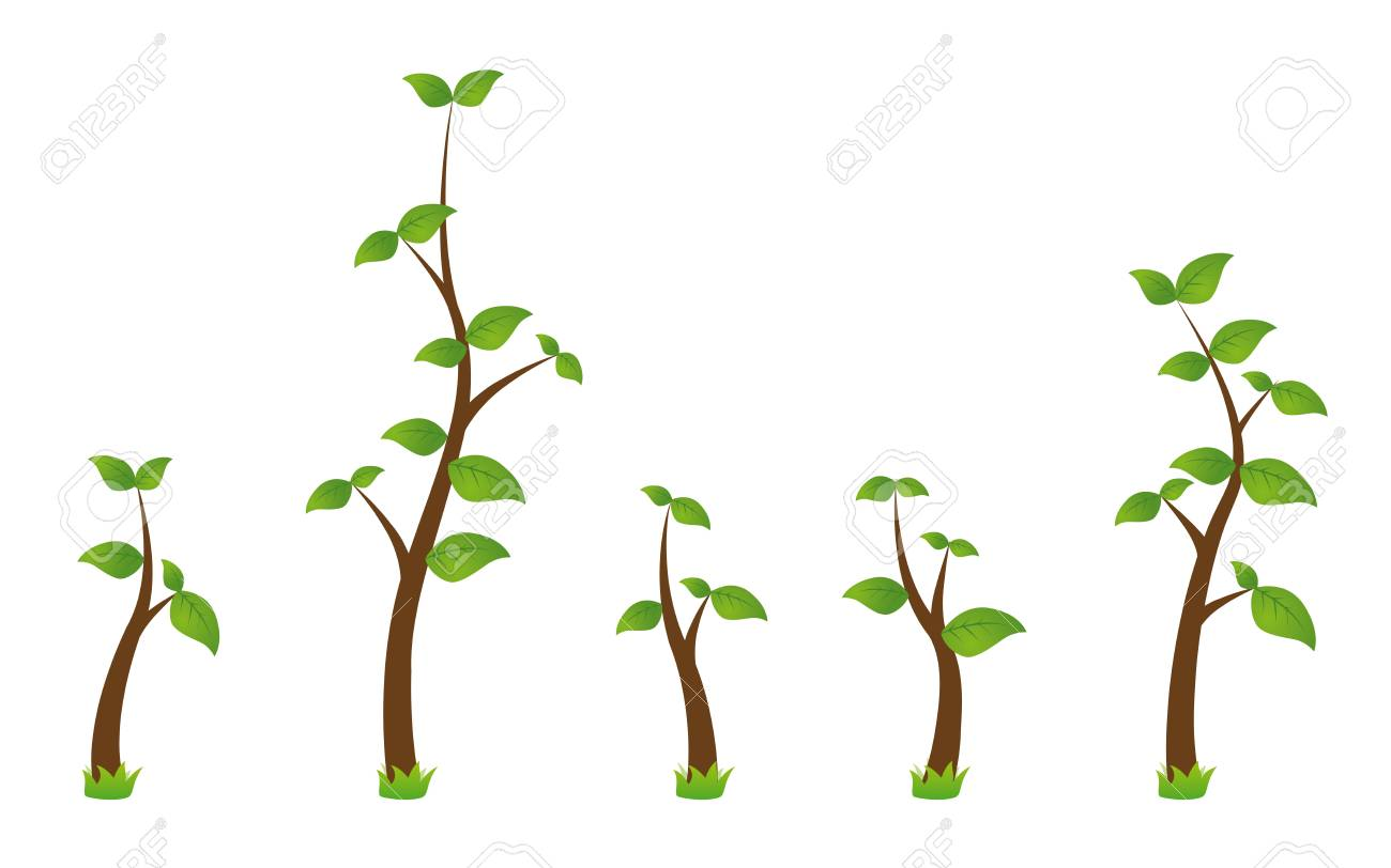 set of five green branches Stock Vector - 17569706