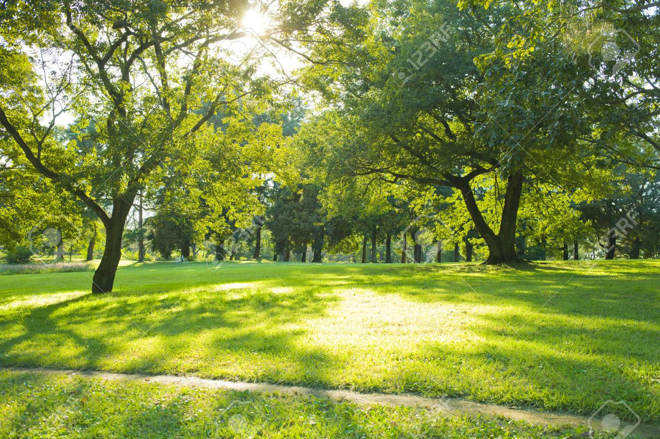 Sunny Park Stock Photo, Picture And Royalty Free Image. Image 84396340.