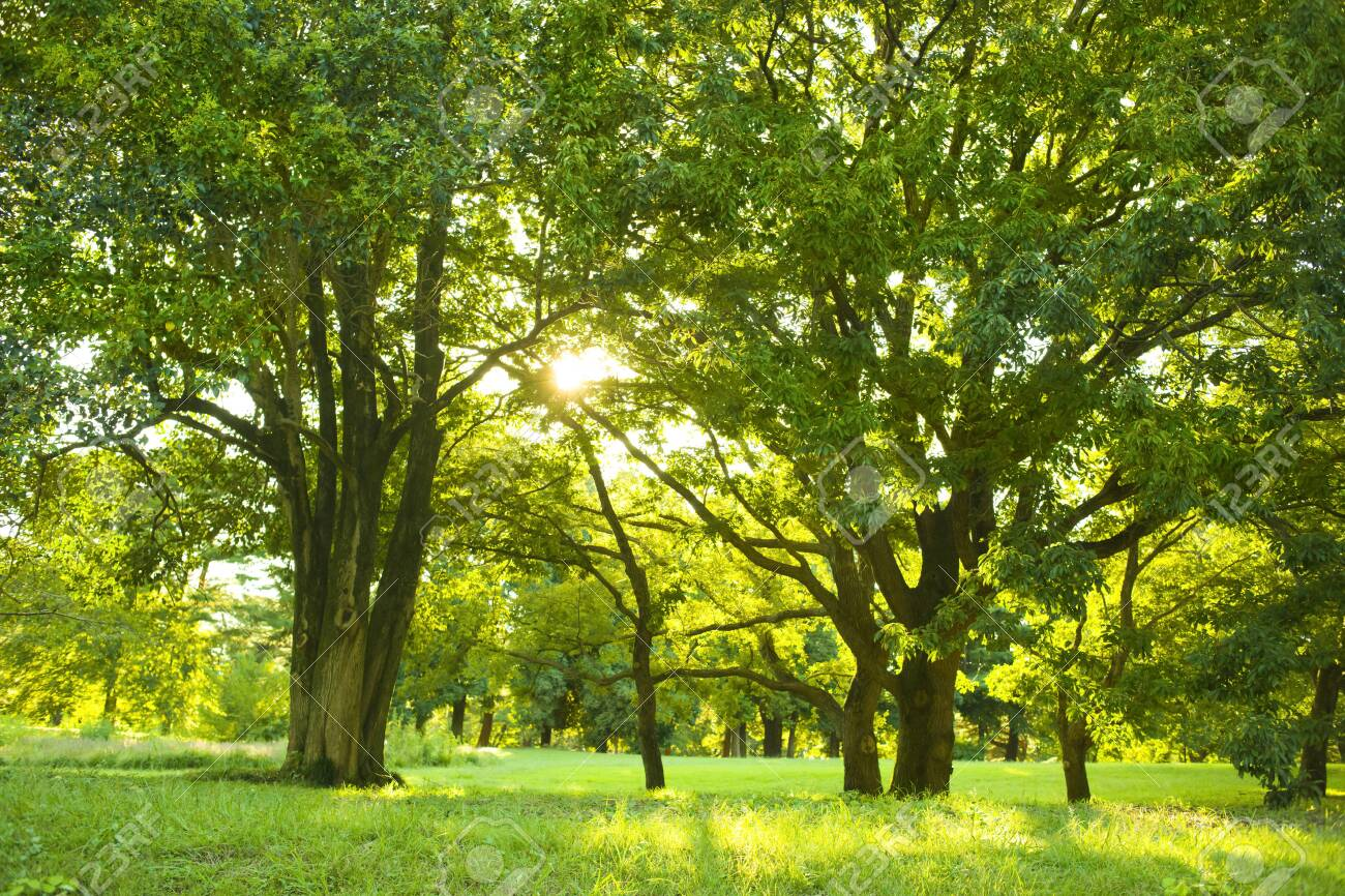 morning park - 134765099