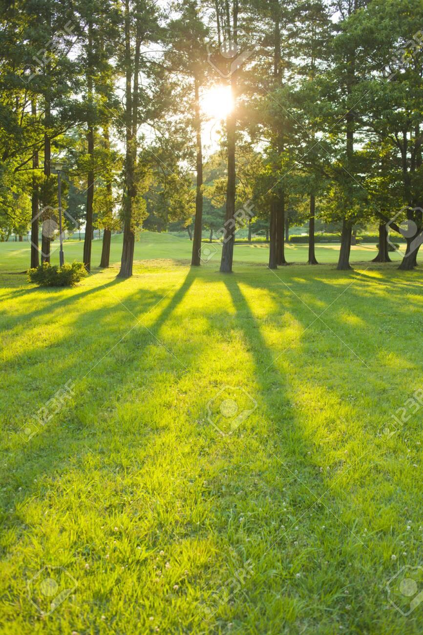 morning garden - 134926620