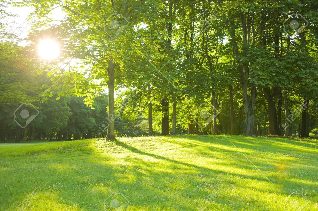 morning park - 135362102