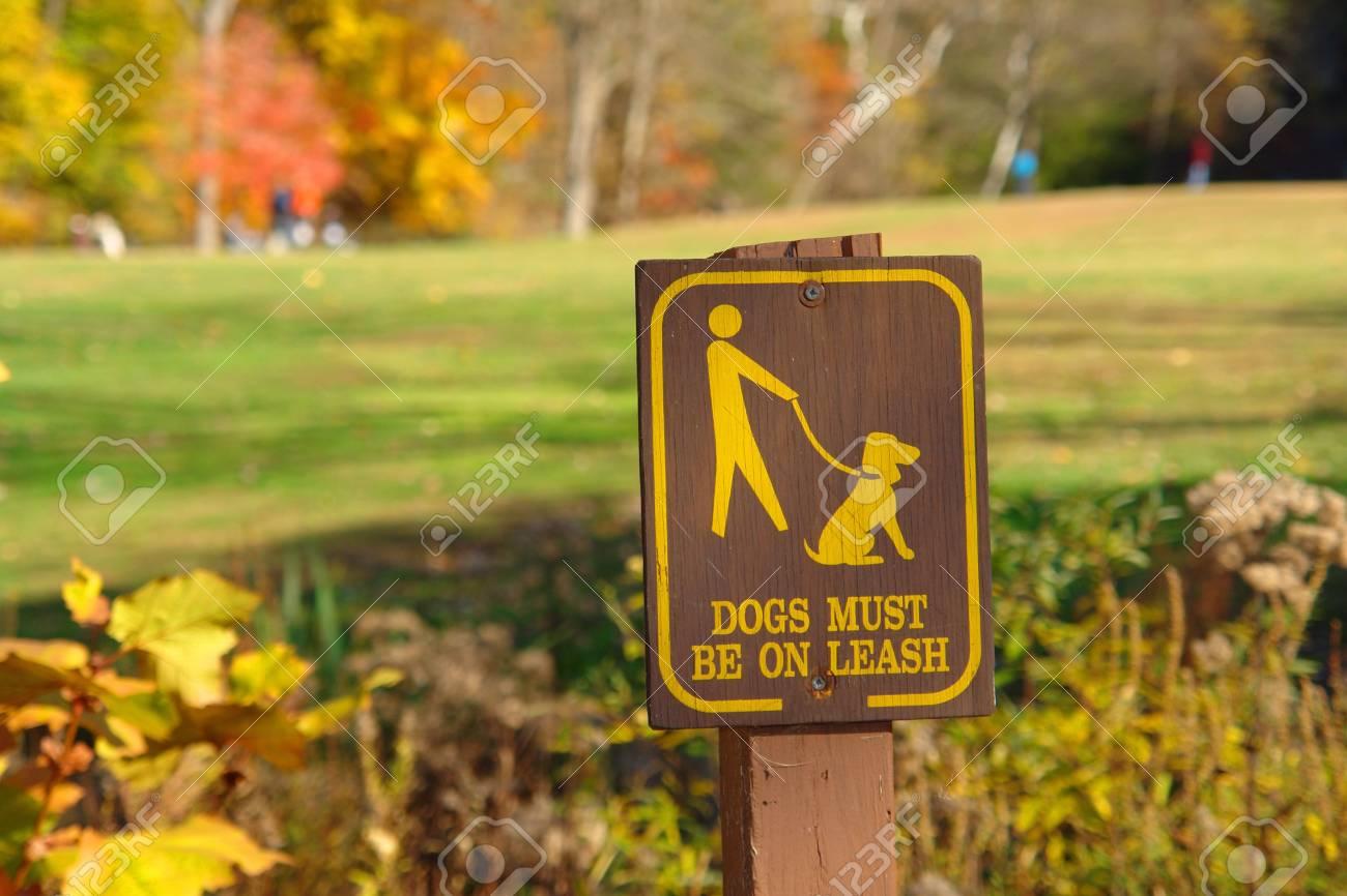 Walk Your Dog On Leash - 607559