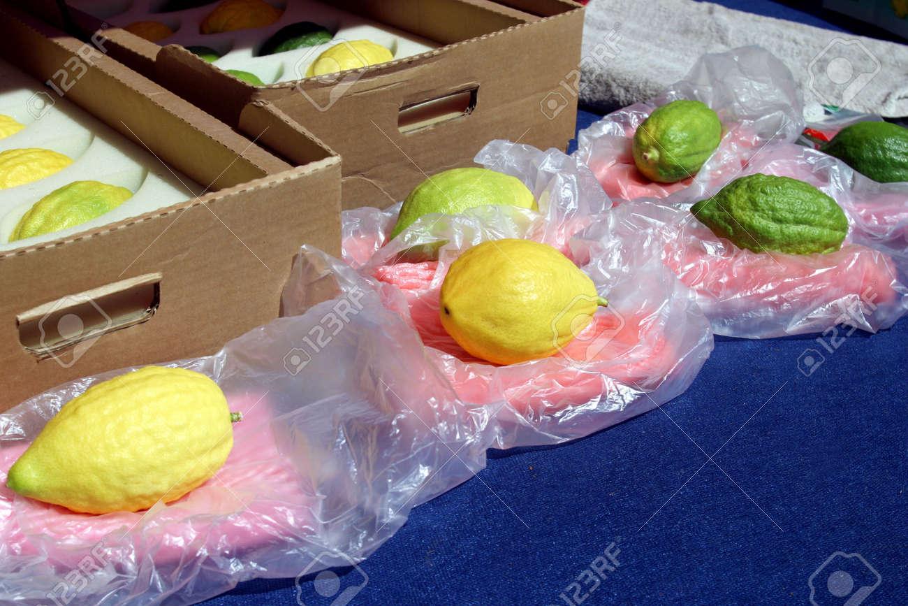 Jewish citrons & ceremonial palm frond display, Sukkot - Tabernacles Stock Photo - 912431