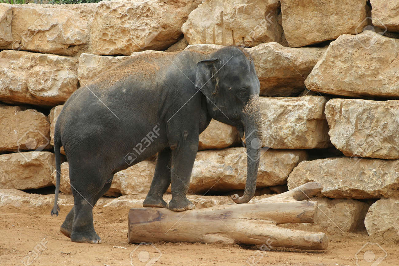 Playful elephant in front of rocks Stock Photo - 912444