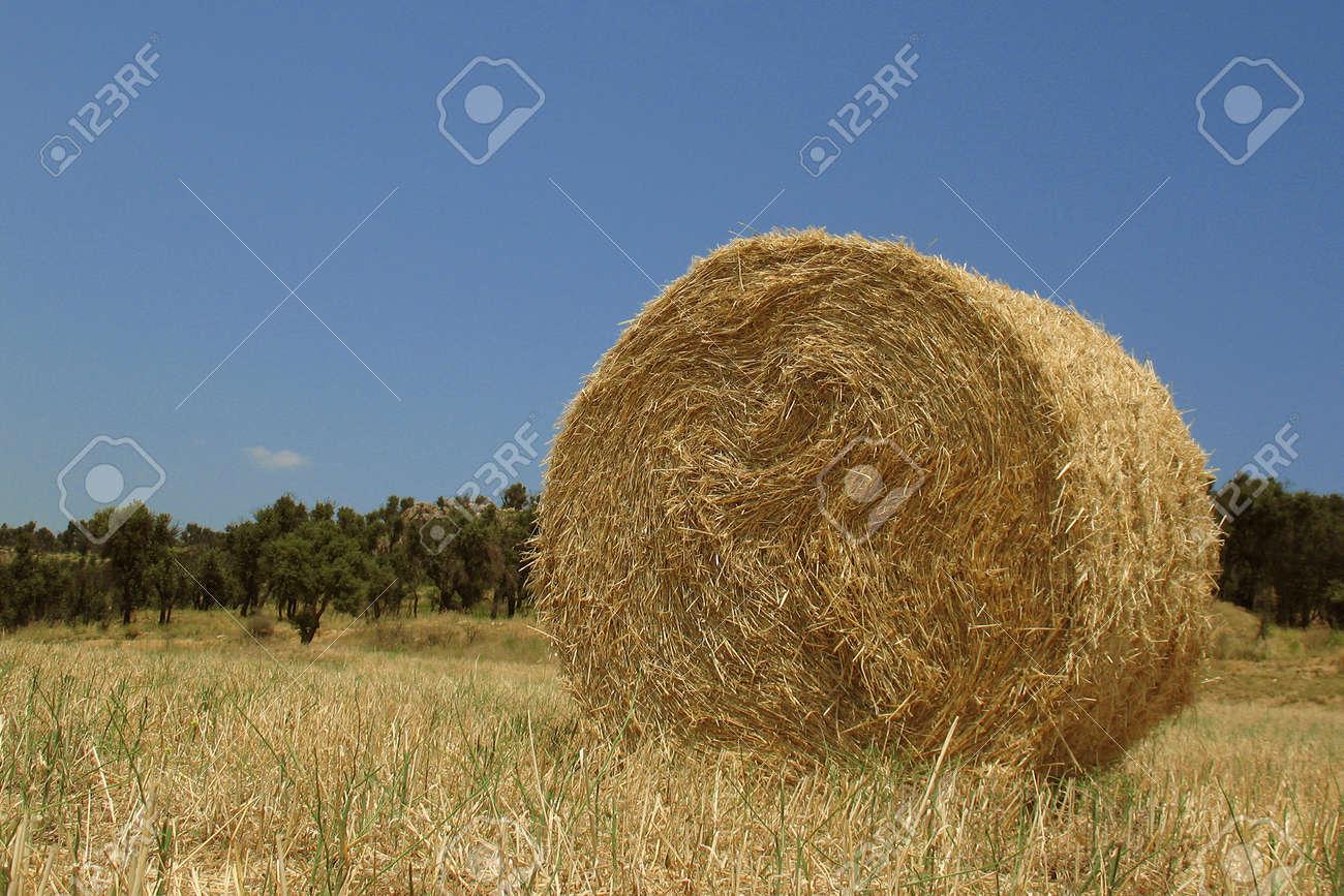 Round haystack Stock Photo - 1405288