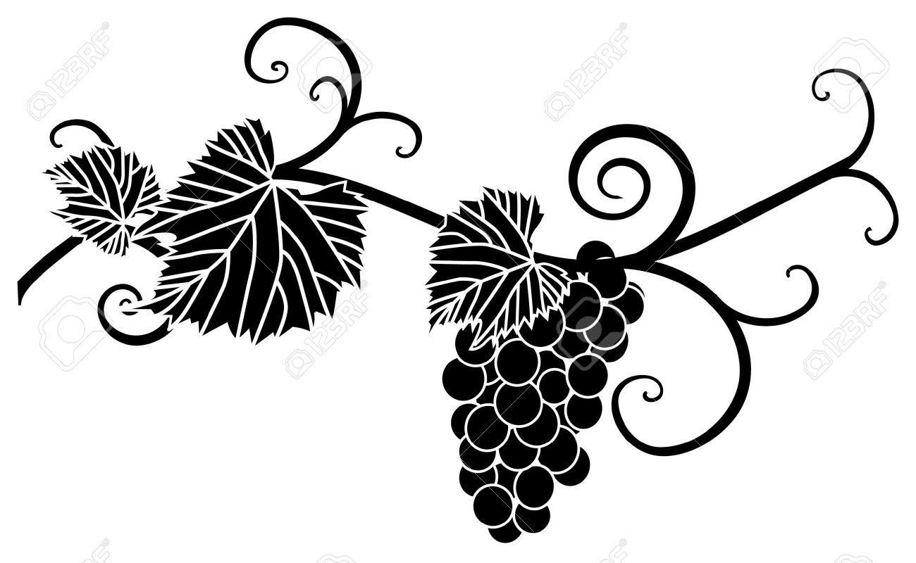 Grape Silhouette With Vines And Leaves Royalty Free Cliparts ...
