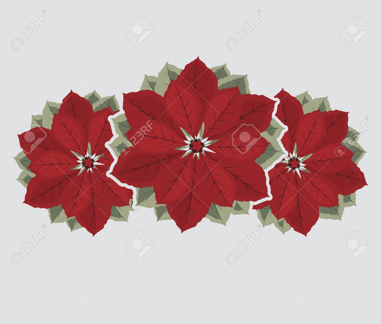 Christmas Poinsettia Flower Royalty Free Cliparts Vectors And