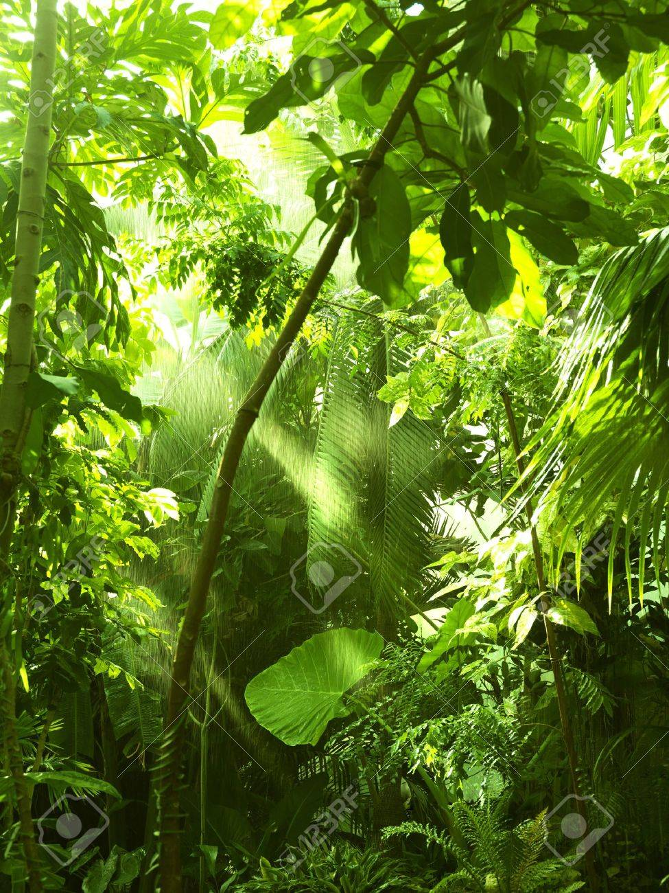 Tropical forest, trees in sunlight and rain Stock Photo - 15206075