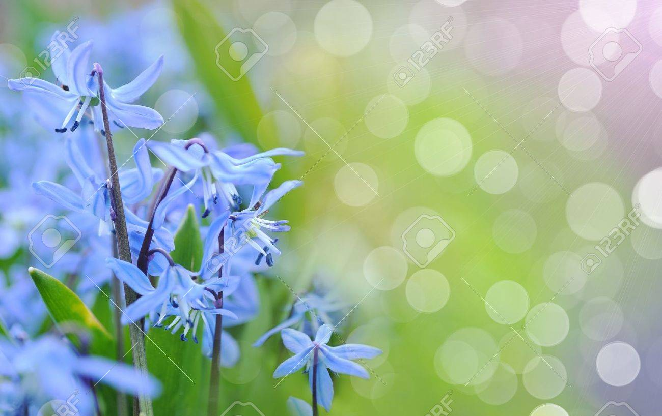 Blue spring bluebells growing in forest Stock Photo - 11392402