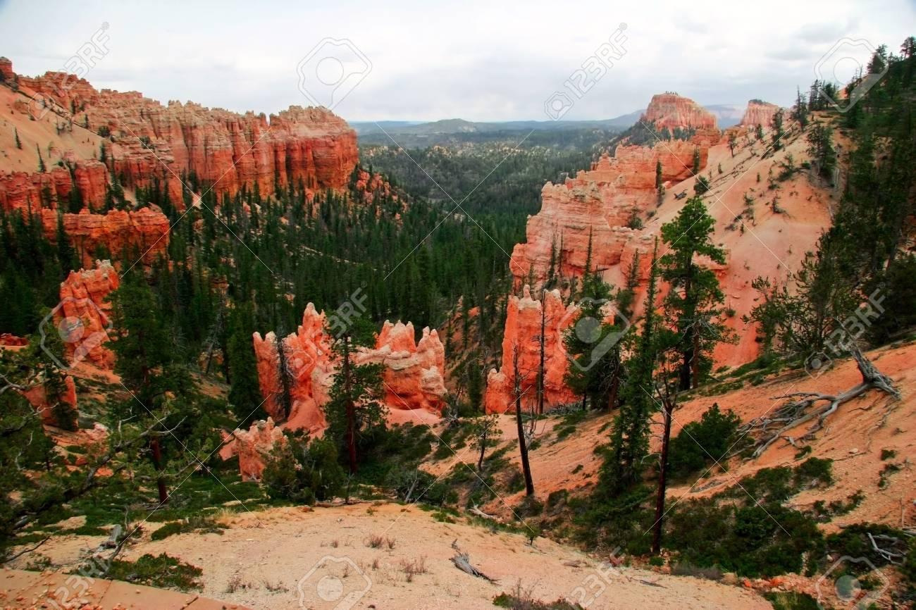 Slopes of Bryce canyon. Utah state. USA Stock Photo - 4761037
