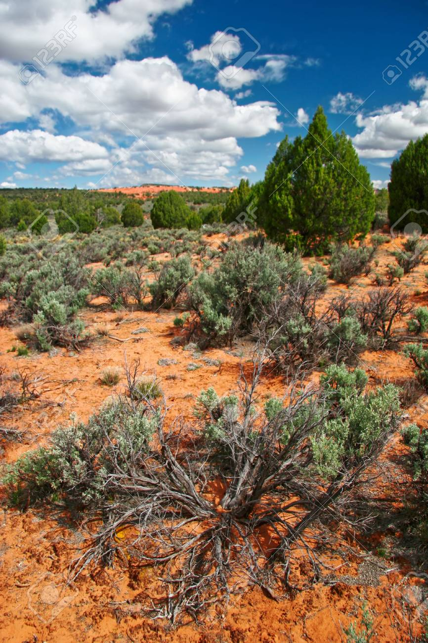 Landscape near Coral Pink Sand Dune National Park. Utah. Stock Photo - 5394736