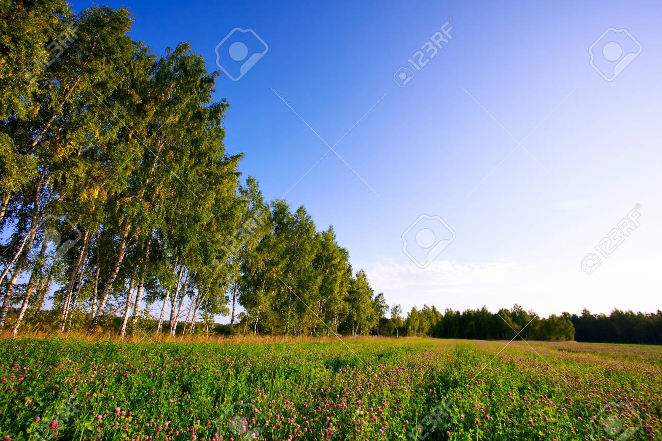 Summer field with flowers under blue sky Stock Photo - 8021857