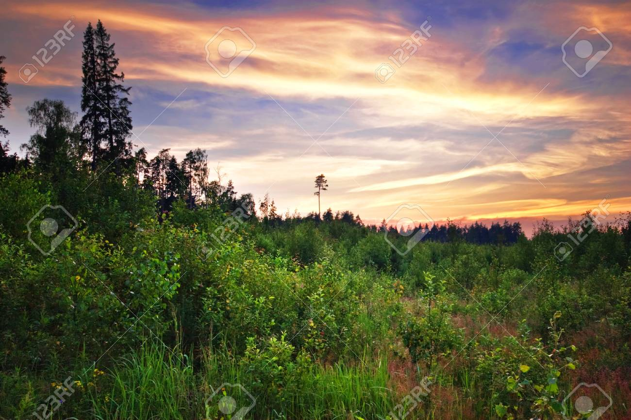 Sunset in summer field Stock Photo - 8388639