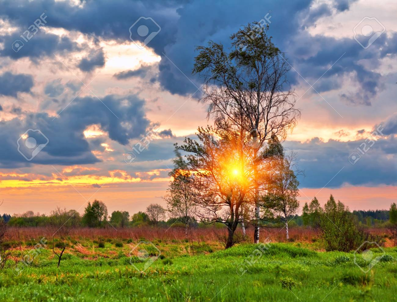 Landscape with coloful sunset in summer field Stock Photo - 10654885