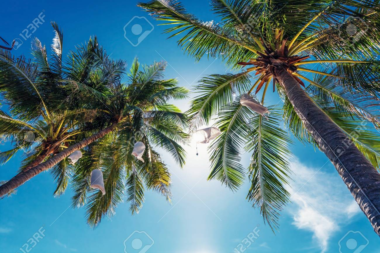 Palm trees on blue sky background Stock Photo - 15505908