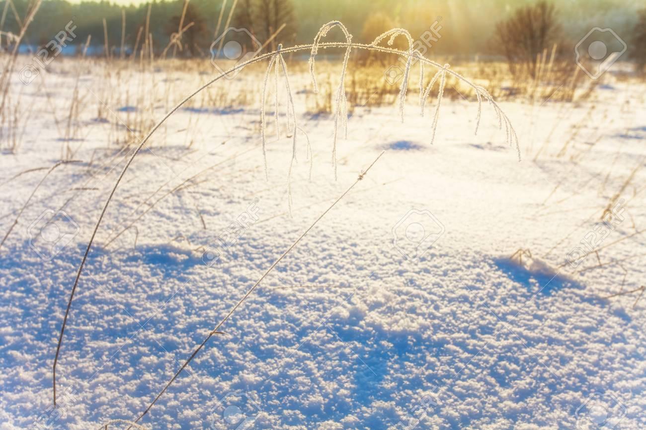 winter field in soft sunset light Stock Photo - 16217077