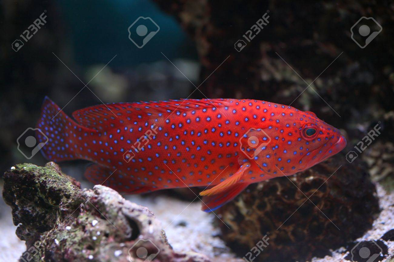 The Color Fish In An Aquarium Stock Photo, Picture And Royalty Free ...