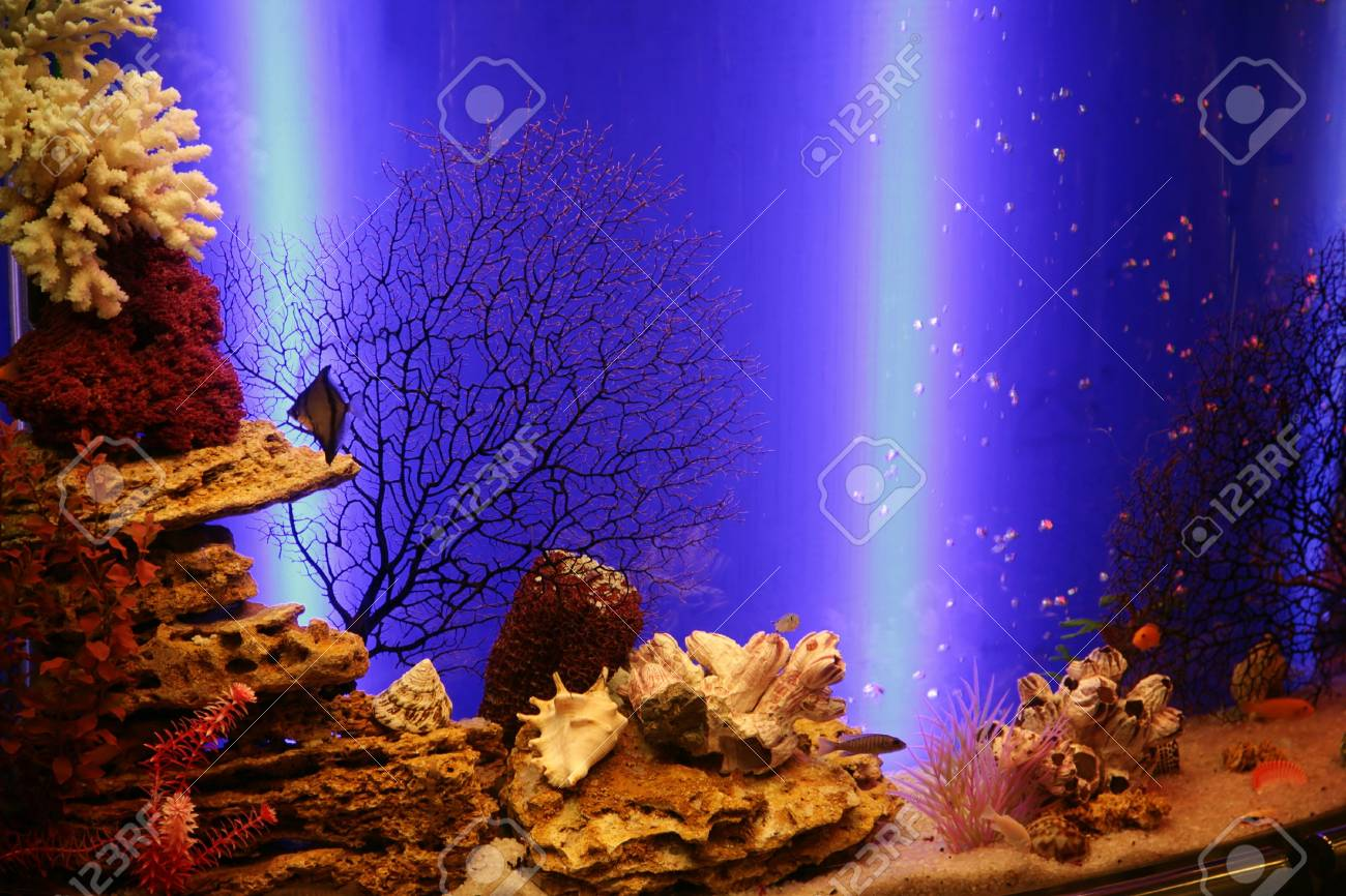 Beautiful aquarium with small fishes and corals Stock Photo - 3082554