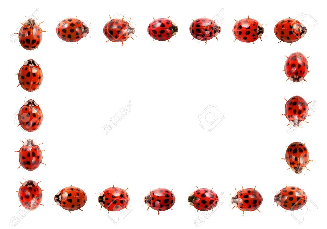 Ladybug Frame Stock Photo, Picture And Royalty Free Image. Image ...