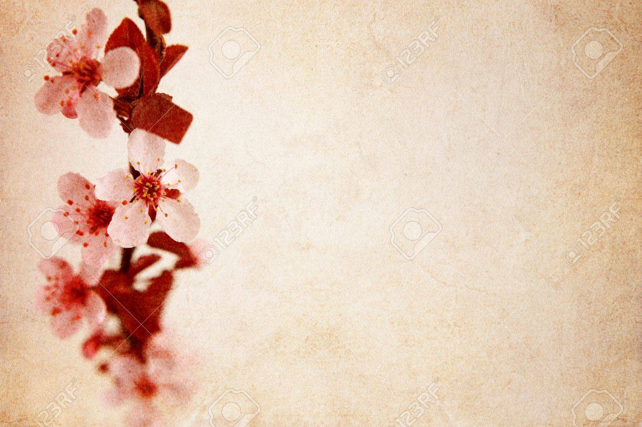 Cherry blossom background Stock Photo - 13326990