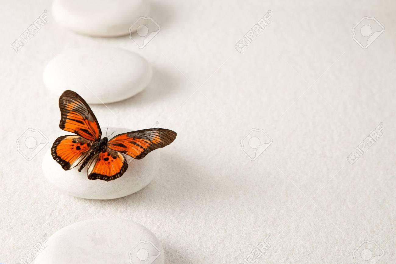 Resultat d'imatges de sencillez mariposa