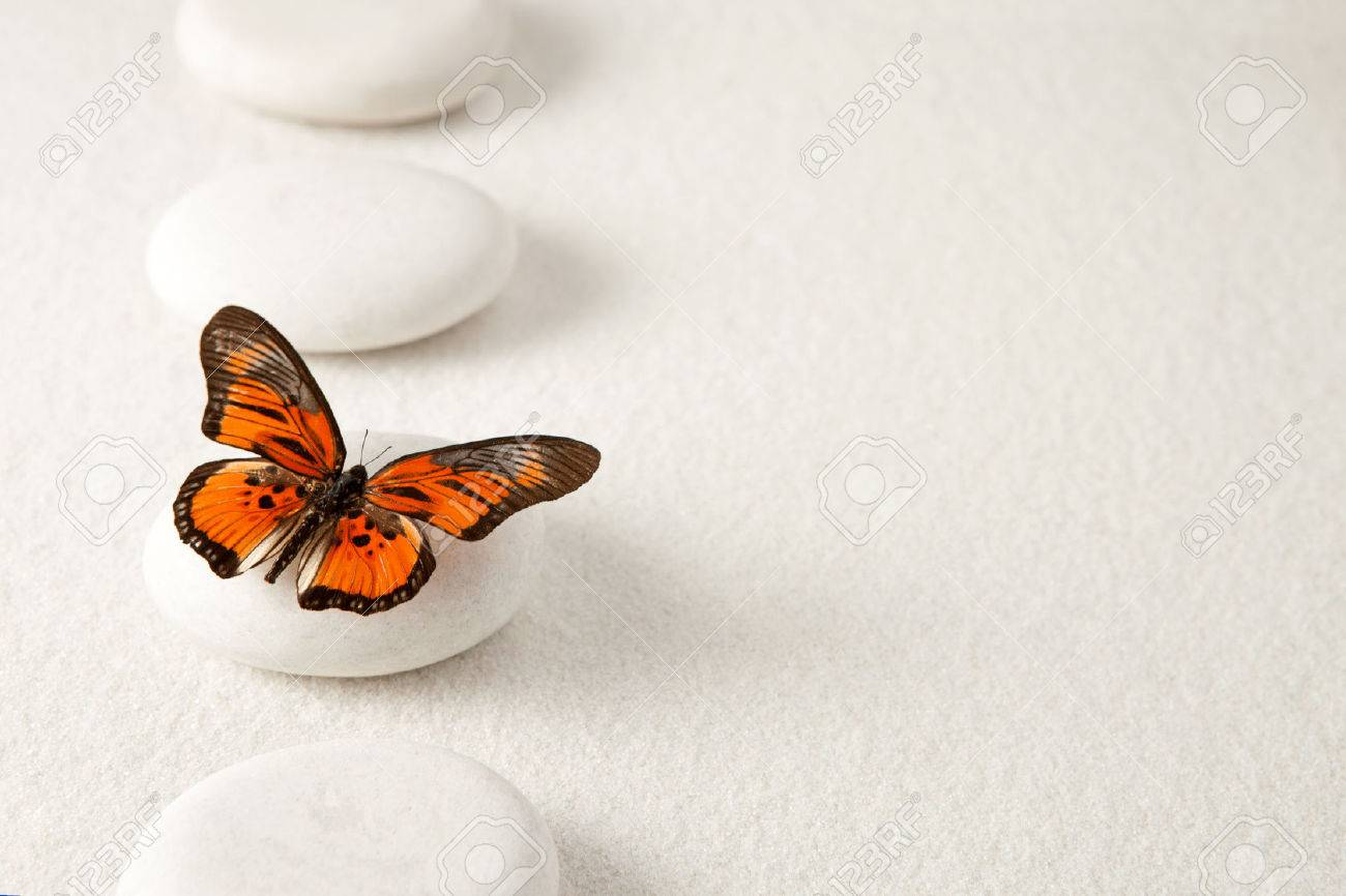 Background with rocks and butterfly - 27580855