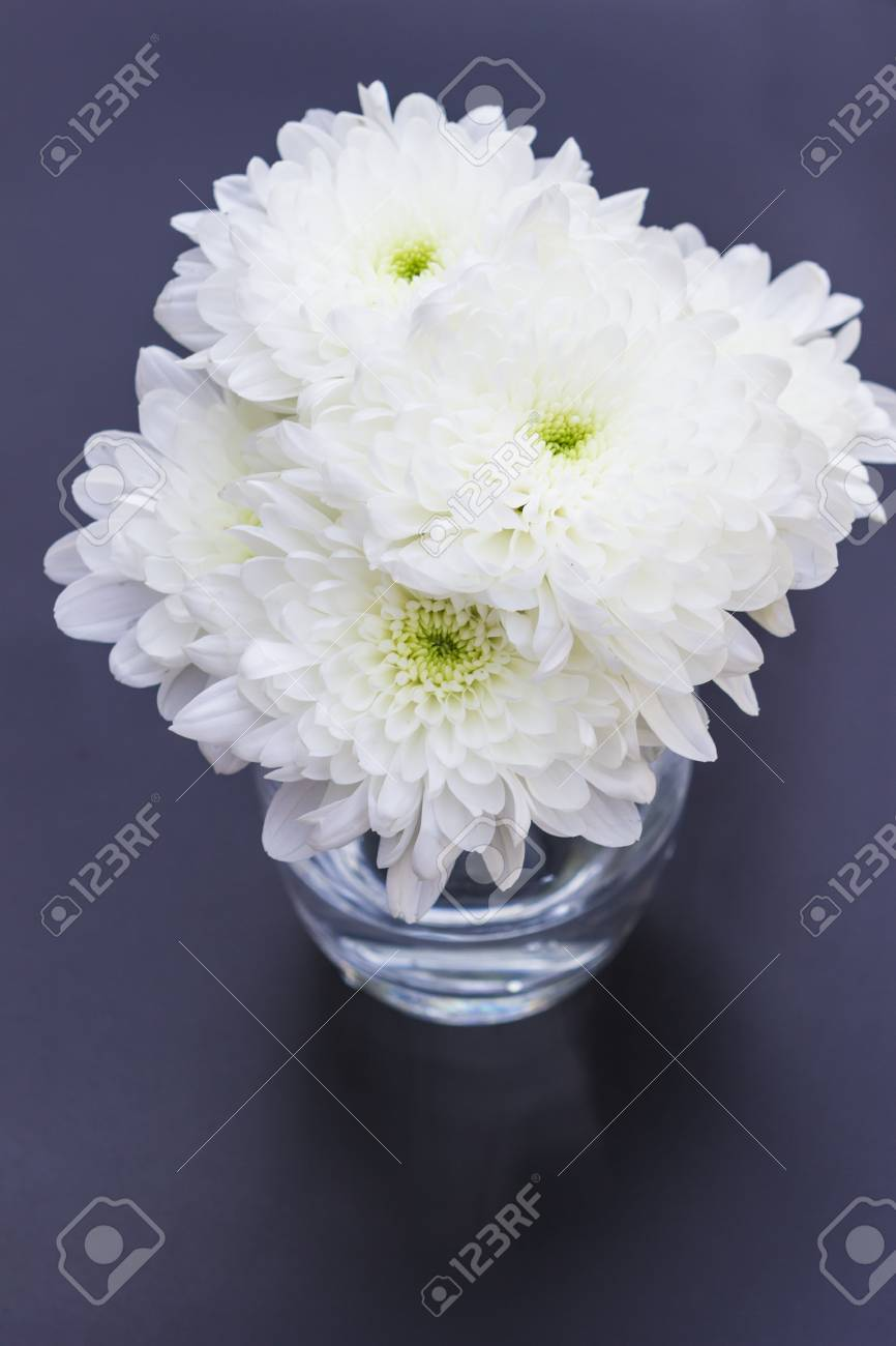 White Mums Or Chrysanths Flowers Close Up Stock Photo Picture And