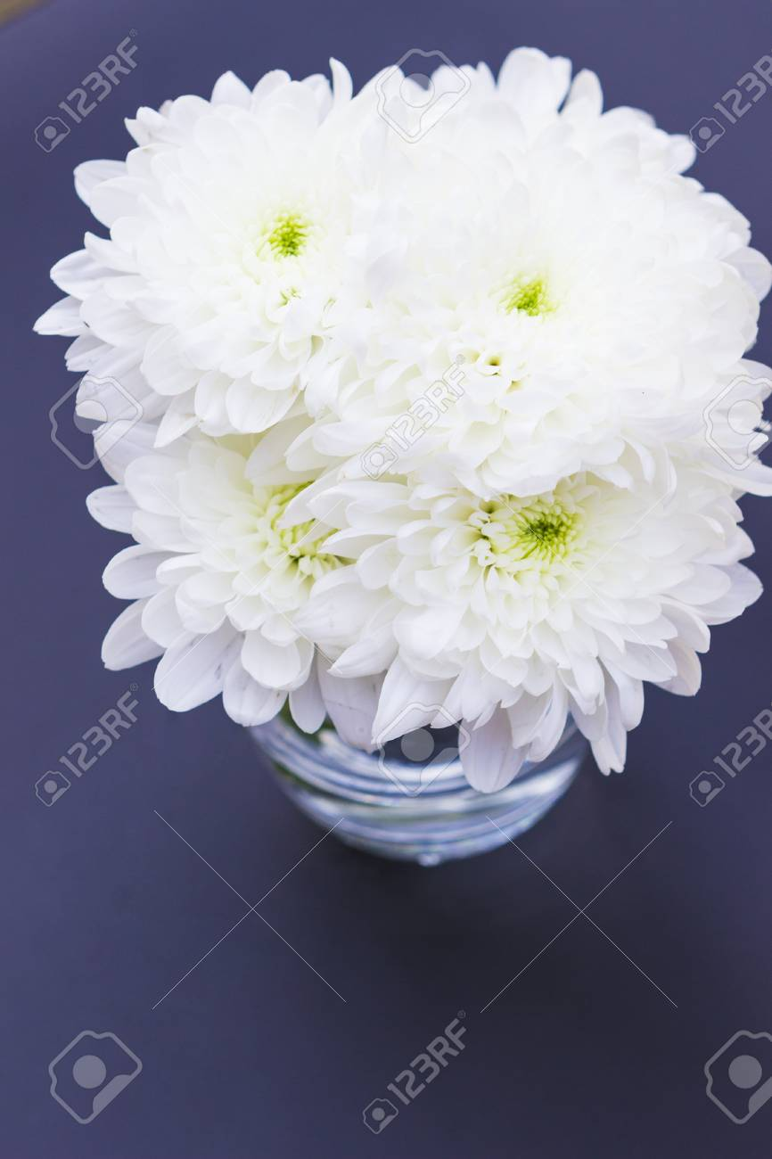 White mums or chrysanths flowers close up stock photo picture and stock photo white mums or chrysanths flowers close up mightylinksfo