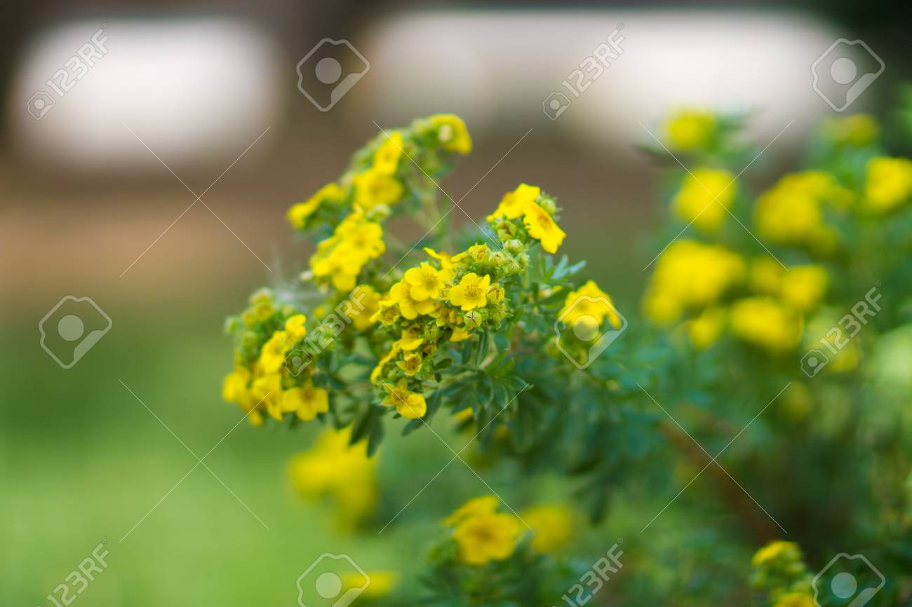 Tiny Yellow Flowers Stock Photo Picture And Royalty Free Image