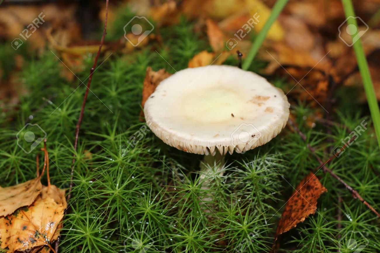 秋の森の自然の壁紙 食用キノコします の写真素材 画像素材 Image