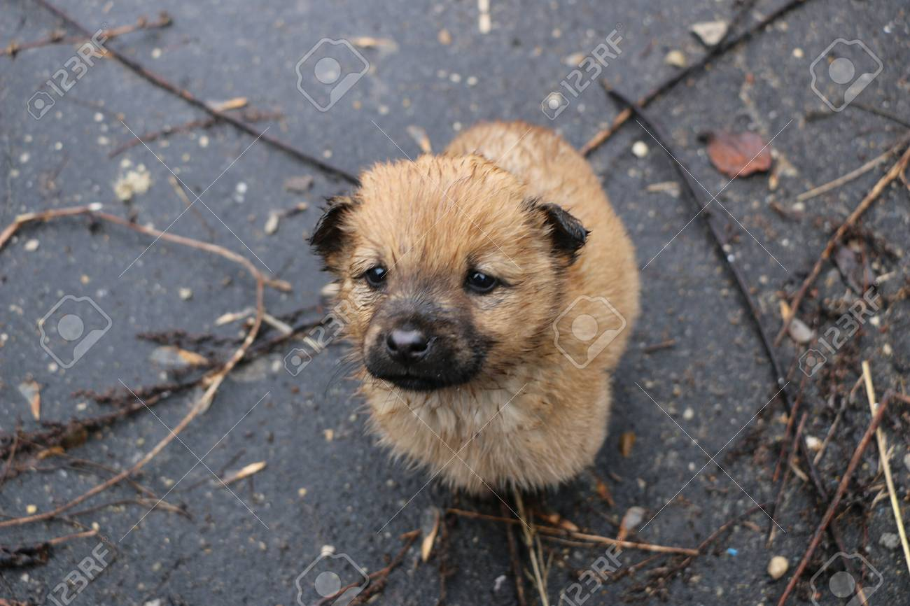 Image result for puppy wet