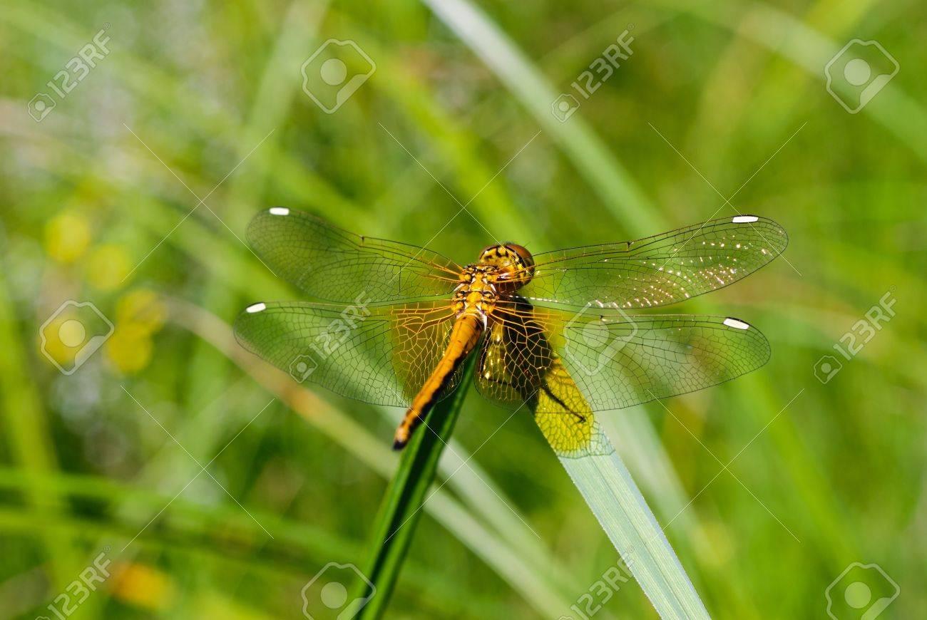 dragonfly Stock Photo - 10431869