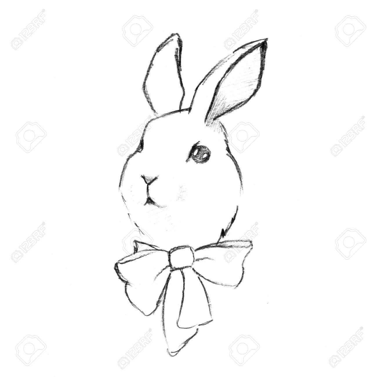 Rabbit pencil sketch 1 stock photo 47999076