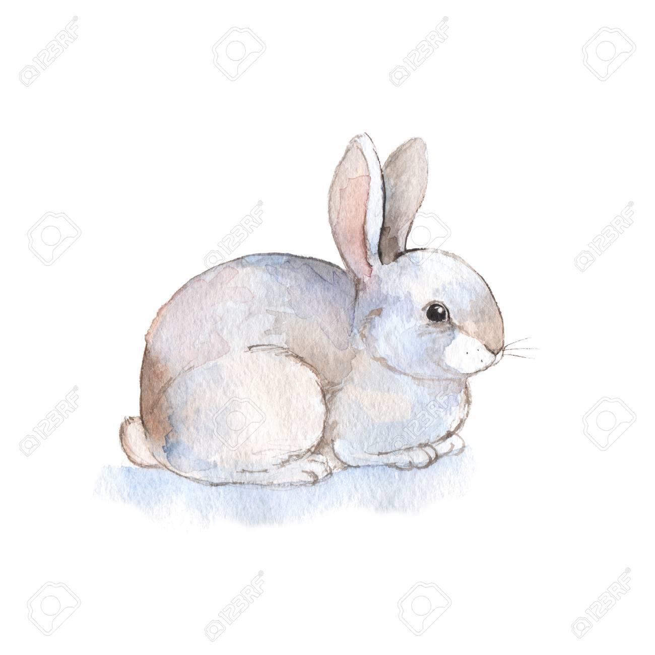 White rabbit 2. Watercolor illustration. Hand-drawn - 56251312