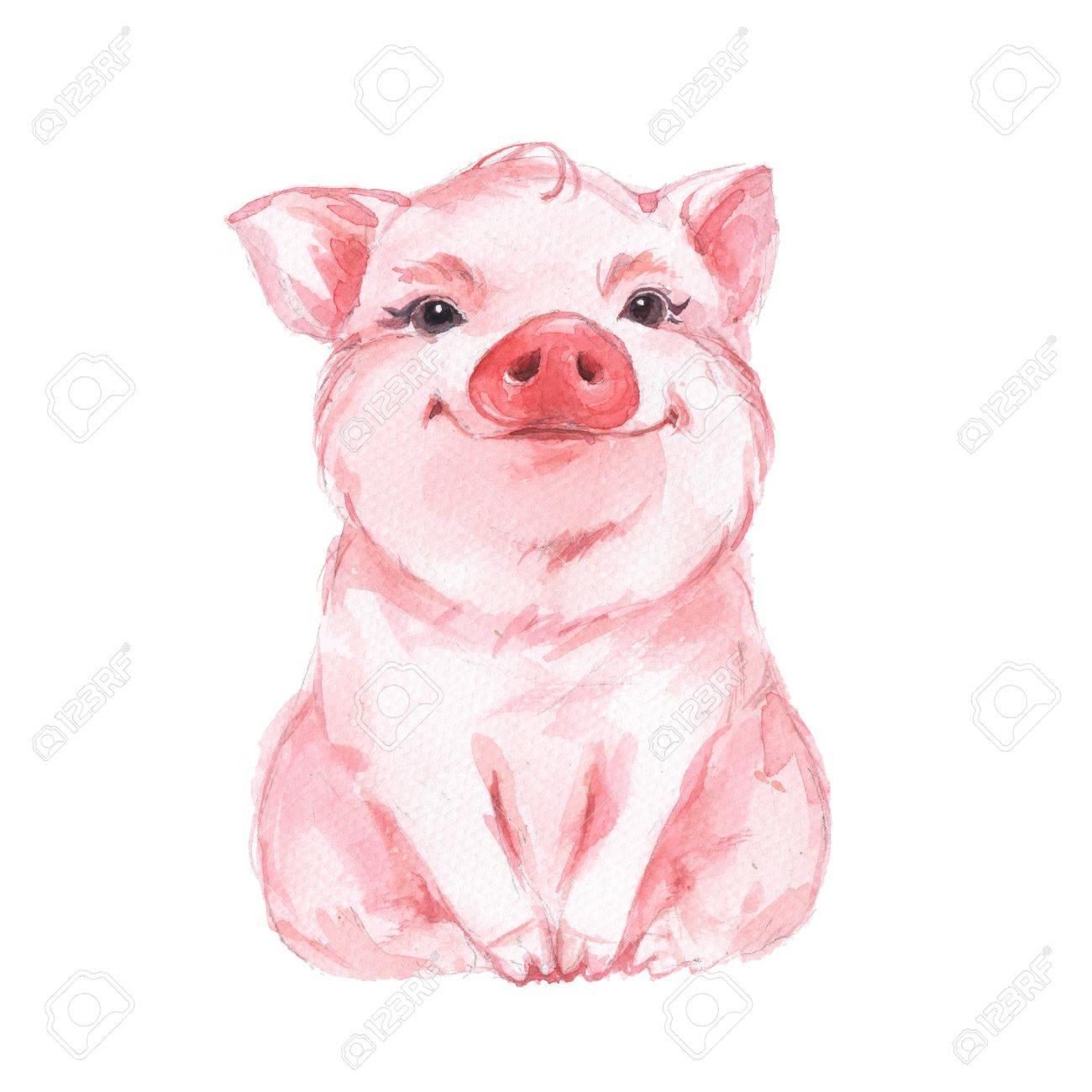 Funny pig. Cute watercolor illustration - 62199988