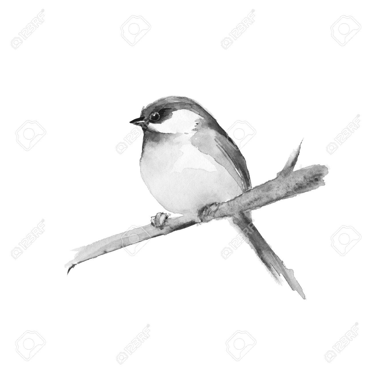 Small bird on branch. Black and white watercolor painting. - 64237344