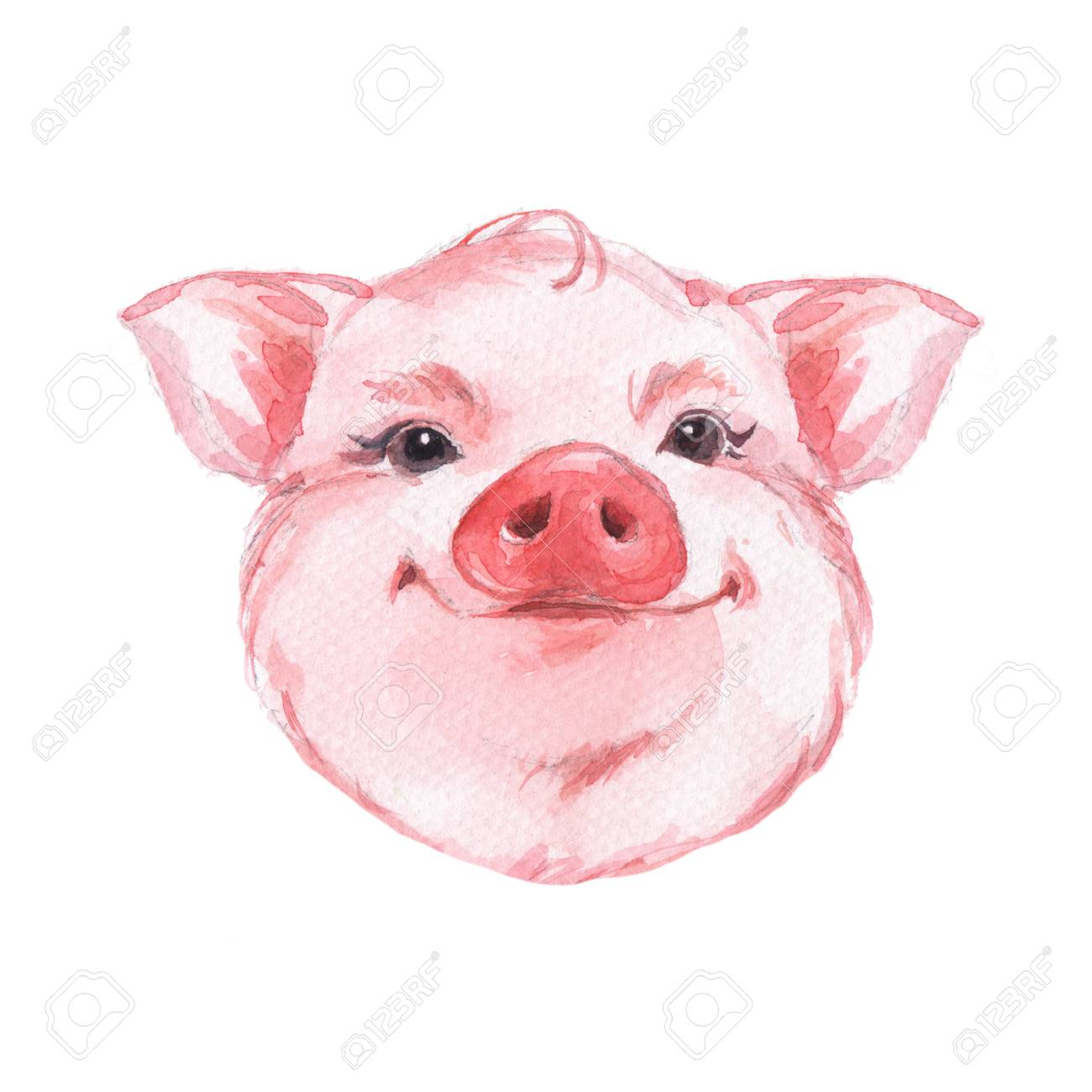 Funny pig. Cute watercolor animal face. Isolated on white - 68133644