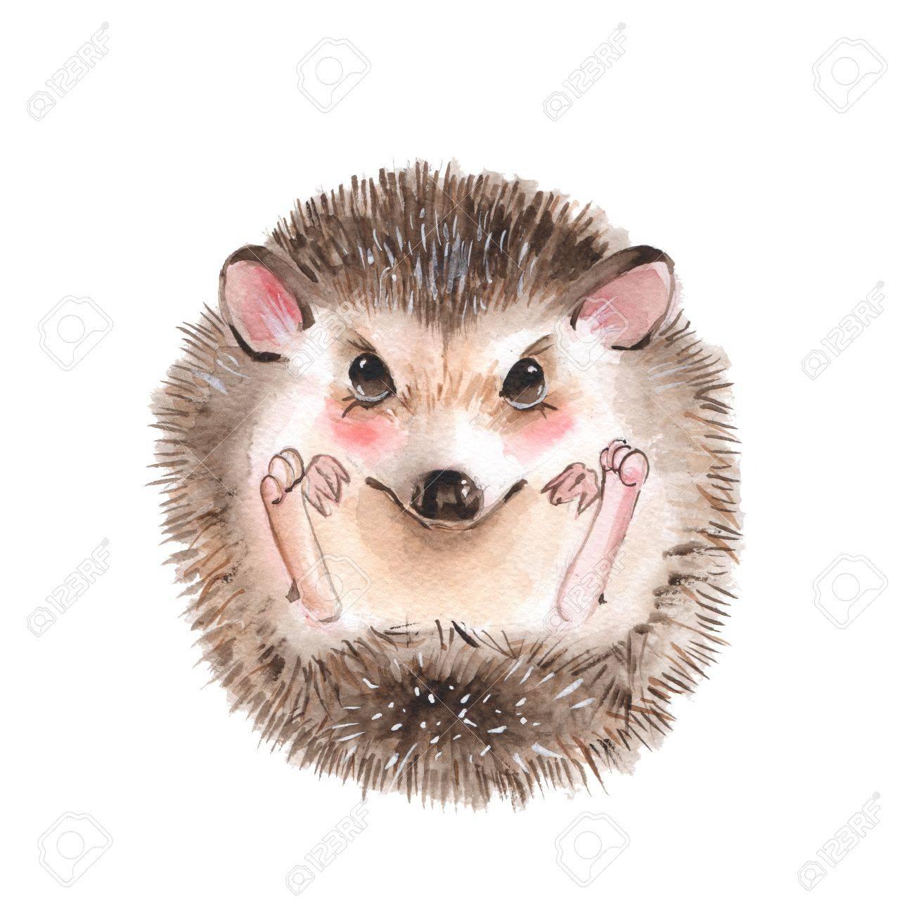 Cute hedgehog. Cartoon watercolor illustration - 76129487