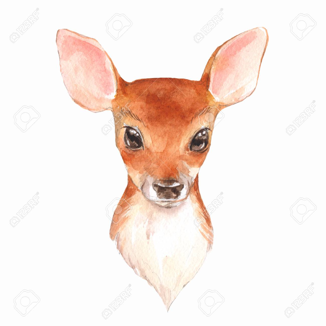 How To Draw A Baby Deer Easy Step By Step