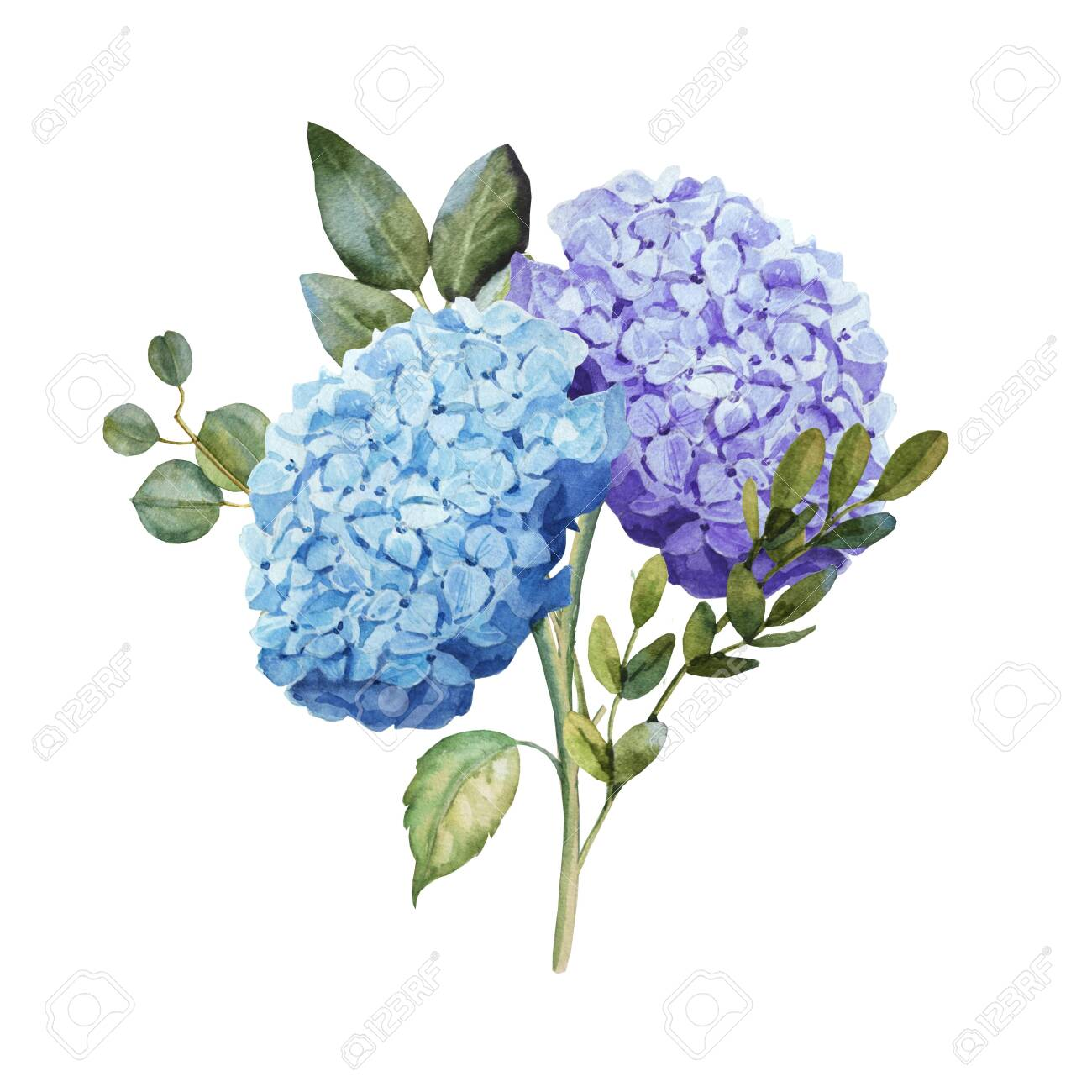 Watercolor Blue Hydrangea Flower Bouquet With Leaves Wedding Stock