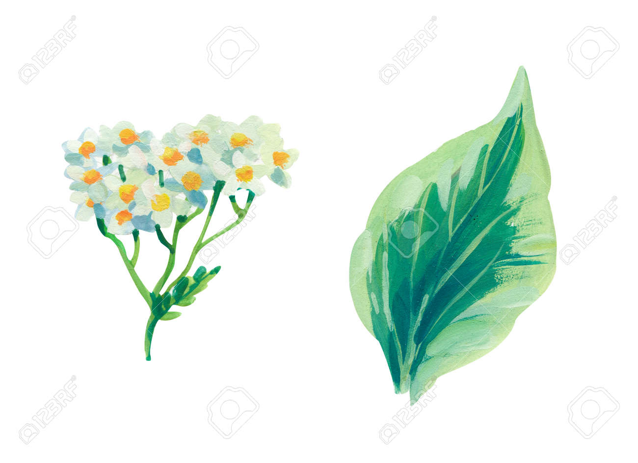 Hand painted acrylic or gouache floral elements set on white background - 163875229