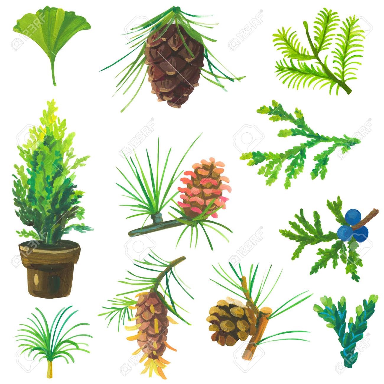 Hand painted acrylic or gouache conifers and cones set on white background - 163875414