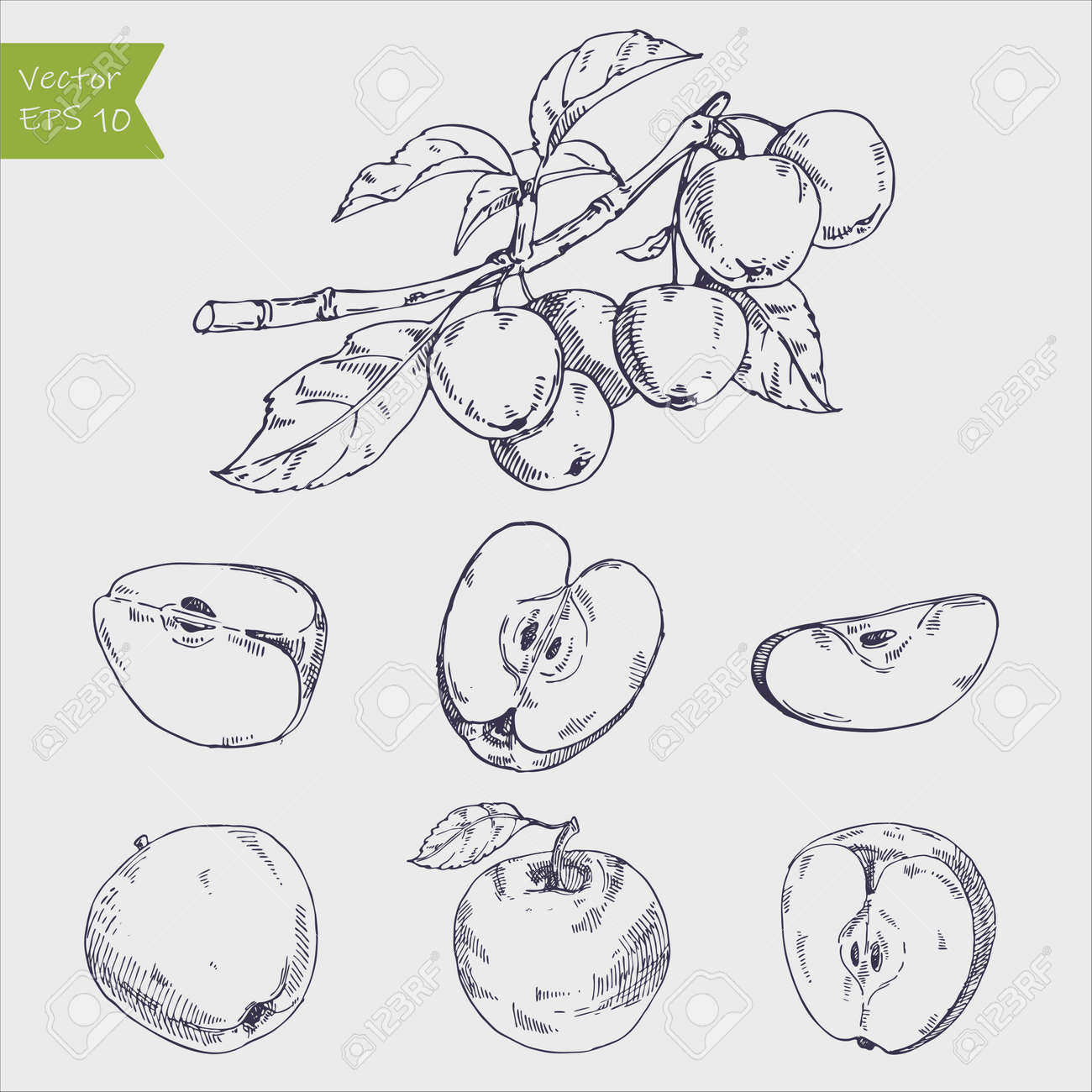 Hand drawing apples on apple tree branch. - 163875439