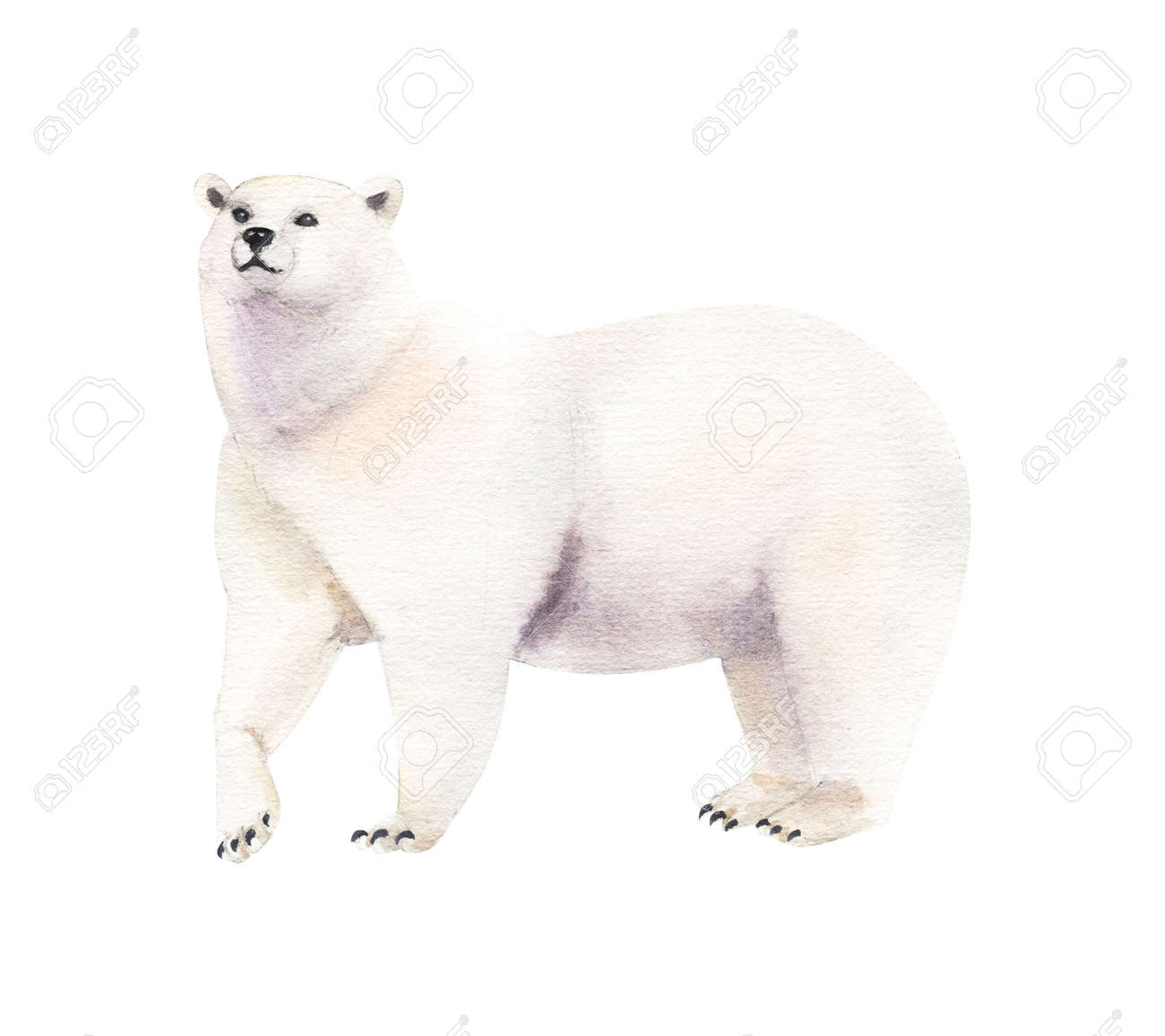 Watercolor realistic white bear animal isolated on a white illustration. - 164593878