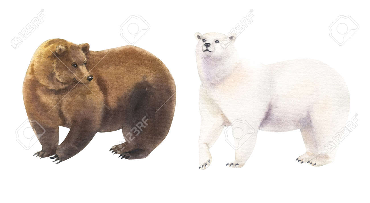 Set of clumsy watercolor bears, hand painted illustration on white - 164600551