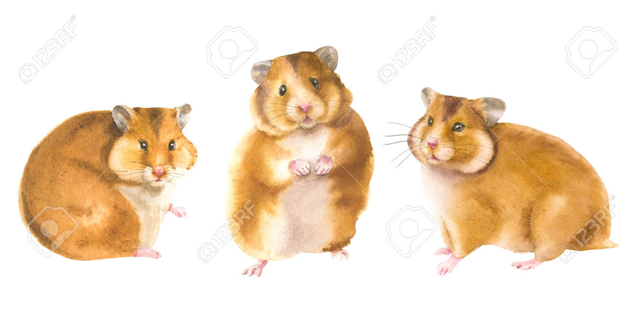 Watercolor illustration of a hamster in white background. Animal silhouette watercolor sketch. Wildlife art illustration. Vintage graphic for fabric, postcard, greeting card, book, poster, tee-shirt - 166760261