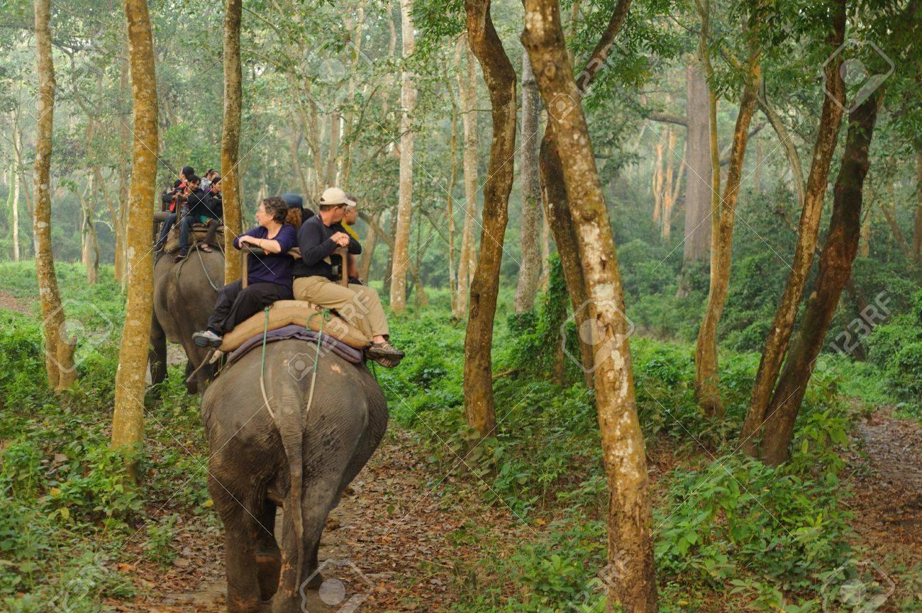 CHITWAN, NEPAL - OCTOBER 27, 2014: Elephants walking on the lawn