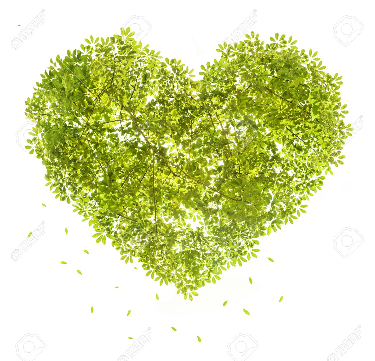 heart shape of green leave symble of love on white background